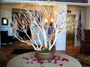 Manzanita Tree rental New York, NY