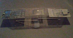 Large 2-Door Live Animal Trap rental Columbus, OH